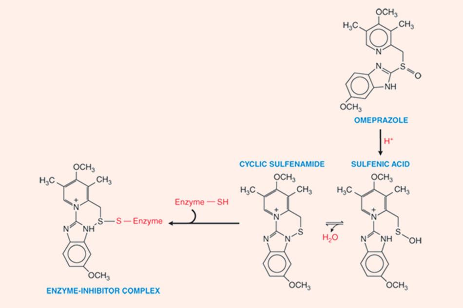 Omeprazole được hoạt hóa thành dạng có hoạt tính