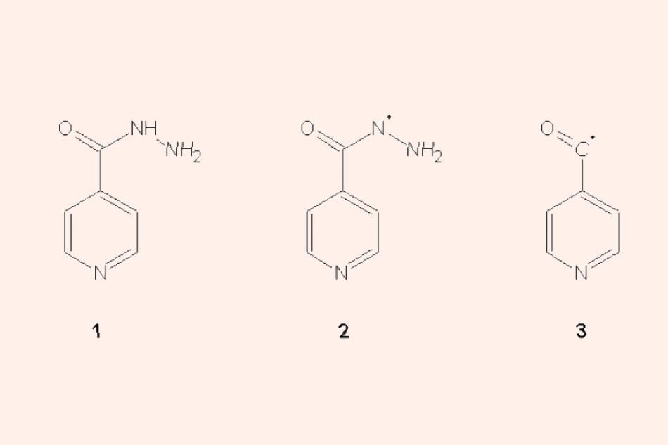 Cấu trúc hóa học của Isoniazid cũng như các gốc tự do sinh ra từ Isoniazid