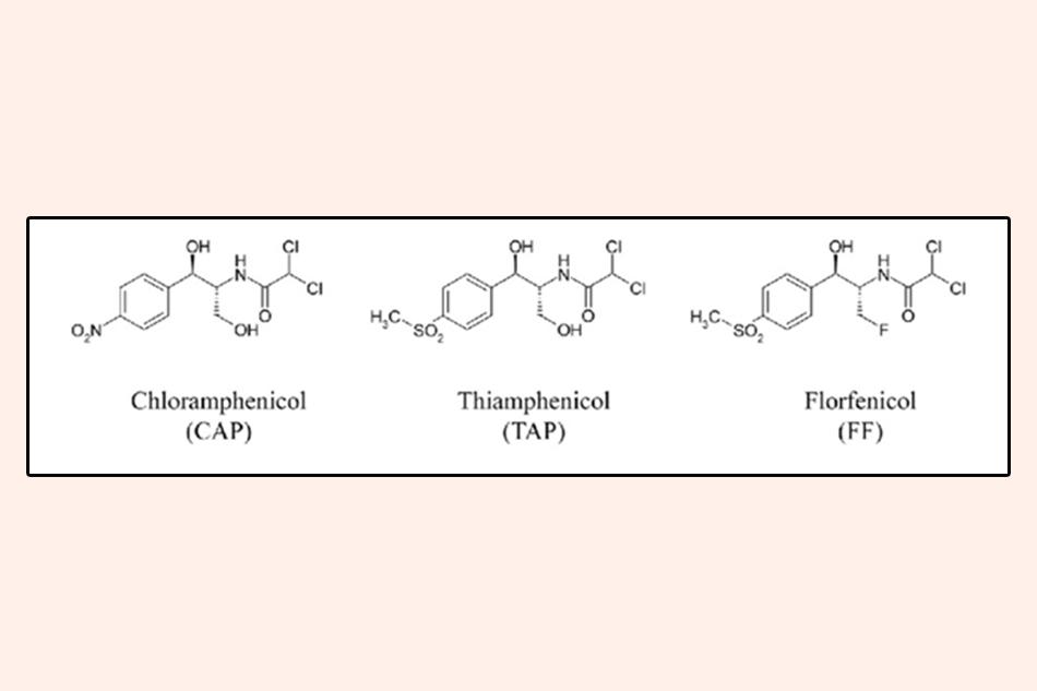Cấu trúc hóa học của Chloramphenicol, Thiamphenicol và Florfenicol