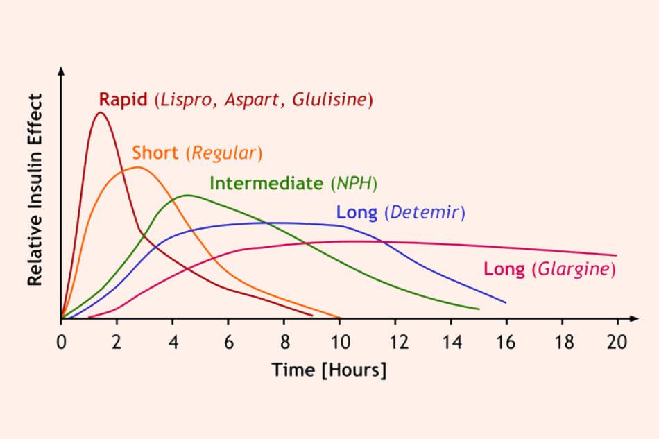 Minh họa cường độ và thời gian tác dụng của một số loại Insulin