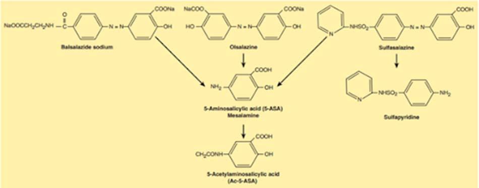 Ảnh: Cấu trúc hóa học và con đường chuyển hóa các thuốc nhóm 5-ASA.