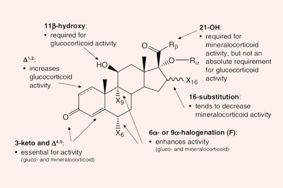 Cấu trúc khung chung của các Corticoid và liên quan cấu trúc – tác dụng (SAR)
