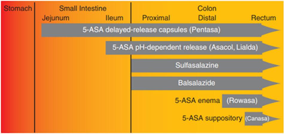 Ảnh: Vị trí trong đường tiêu hóa mà 5-ASA được giải phóng từ các công thức bào chế khác nhau.