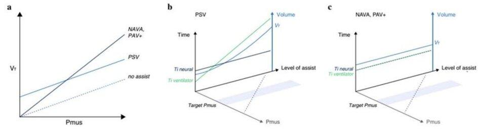 Hình 2 aminh họa sơ đồvềmối quan hệgiữa nỗlực của bệnh nhân (áp lực cơhô hấp, Pmus) và thểtích khí lưu thông (VT) trong nhịp thở tự phát không có trợ giúp (đường đứt nét), trong quá trình thông khí hỗ trợ áp lực (PSV) và đối với các chế độ tỷ lệ như thông khí hỗ trợ tỷ lệ - hệ số khuếch đại điều chỉnh với tải (PAV+) và hỗ trợ thông khí điều chỉnh thần kinh (NAVA). b Tương tác giữa bệnh nhân với máy thở trong thời gian PSV. Tăng mức hỗ trợ áp lực làm tăng VT (đường màu xanh) và thời gian thở máy (Ti, đường màu xanh lá cây), trong khi nỗ lực của bệnh nhân (Pmus, đường chấm màu xám) được điều chỉnh giảm. Ngoài ra, Ti thần kinh (đường màu xanh lam đậm) vẫn không thay đổi với mức độ hỗ trợ ngày càng tăng, dẫn đến chu kỳ muộn. cTương tác giữa bệnh nhân với máy thởtrong thời gian NAVA và PAV+. Hỗtrợmáy thở được cung cấp tỷlệ thuận với nhu cầu của bệnh nhân trong toàn bộ chu kỳ thở máy (Ti thần kinh = Ti máy thở, lưu ý rằng các đường gạch ngang màu xanh lá cây và xanh lam đậm trùng nhau). Tăng mức hỗ trợ hít vào (mức NAVA hoặc mức tăng PAV+) điều chỉnh giảm Pmus (đường chấm màu xám). Vì não của bệnh nhân chủ yếu kiểm soát VT mong muốn, nên việc thay đổi mức hỗ trợ thường chỉ có tác động tối thiểu lên V T, như được thể hiện bằng đường màu xanh lam ngang trên Thể tích so với mức của đường cong hỗ trợ.