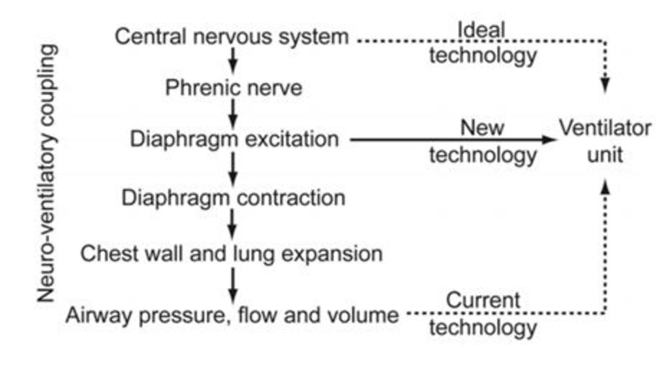 Hình 1. Trình tự kiểm soát thông khí thần kinh, từ tín hiệu hít vào thần kinh đến khi hít vào (cơ học). Cảm biến để kích hoạt hít vào càng được đặt gần bộ điều khiển trung tâm, thì công nghệ này càng được tích hợp tốt hơn với khớp nối thần kinh - thông khí. Hỗ trợ thông khí được điều chỉnh bằng thần kinh (NAVA) đáp ứng với kích thích cơ hoành. (Từ Tham chiếu 6, với sự cho phép)